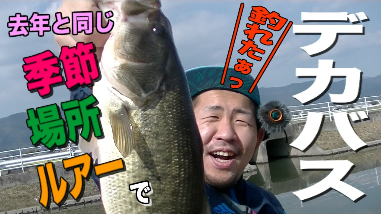 ONE DAY ONE FISH 釣りばっかい